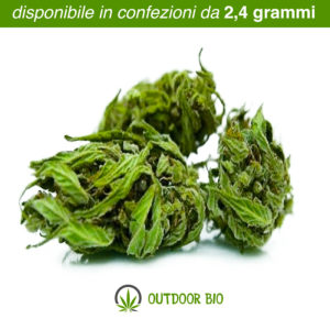 Diana marijuana legale Queen Mary Outdoor bio